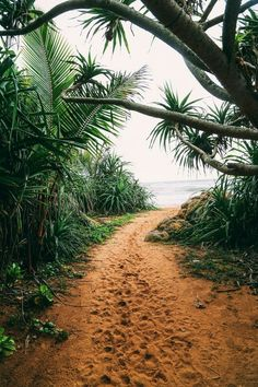 reise inspiration Explore Beruwala and Bentota, Sri Lanka - Use the Tabulation of Your Photos You . Places To Travel, Travel Destinations, Places To Visit, Holiday Destinations, Destination Voyage, Photos Voyages, Travel Goals, Travel Tips, Travel Hacks