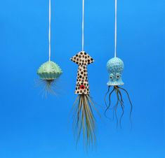 Air Plant Small Hanging Planter Octopus Garden Collection