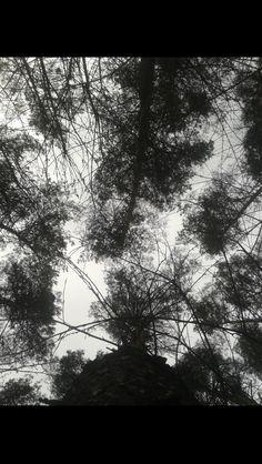 Węgorzewo