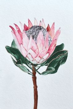 King Protea Wall Tapestry by eentrok Watercolor Print, Watercolour Painting, Watercolor Flowers, Watercolours, Protea Art, Protea Flower, King Protea, Australian Native Flowers, Society 6 Tapestry