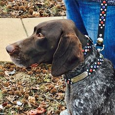 Patriotic Dog Collar Ensemble created for Sonny's Therapy Dog Freyja ~ PinUp Pups - Collars By Kitt