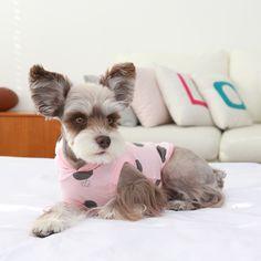 Pinkaholic Bjorn dog hoodie   (NARA-TS705)