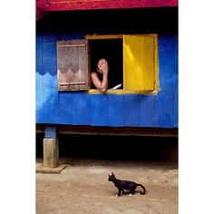 Steve Mccurry, Southeast Asia, Buddhism, Creatures, Cats, Painting, Animals, Instagram, Places