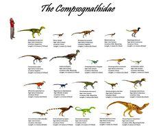 The Compsognathidae: 20 genera