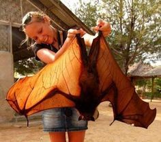 This massive fruit bat will haunt your dreams.  ~ ~    15 Pictures of Nature That Are One Big NOPE