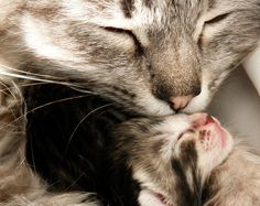 The love of a mother is like no other....