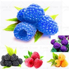 600pcs/bag Raspberry Seeds Organic Fruits And Vegetables Seeds Genuine Wild Plant For Home Garden
