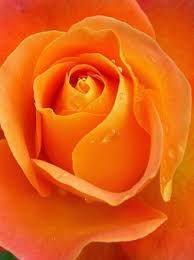 Resultado de imagen para flor de albaricoque