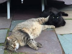 Tom and Jerry - they showed up in spring and became my parent's new backyard cats. They are never apart.
