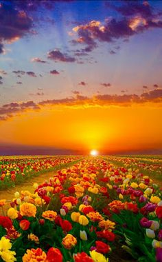 Coucher de soleil - New Tutorial and Ideas Beautiful World, Beautiful Gardens, Beautiful Flowers, Beautiful Places, Colorful Flowers, Nature Pictures, Cool Pictures, Beautiful Pictures, Landscape Photography