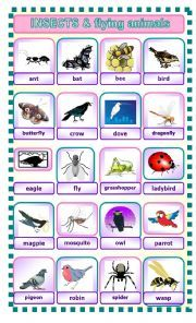 a pictionary to help students learn vocabulary Vocabulary Worksheets, English Vocabulary, List Of Insects, Insects Names, Student Learning, Learn English, Esl, Students, Animals