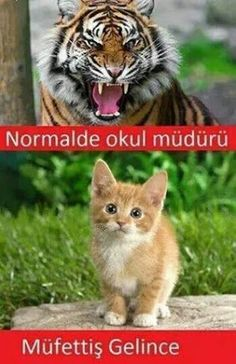 Funny Laugh, Wtf Funny, Funny Cats, Crazy Funny, Cute Cat Gif, Cute Cats, Funny Photos, Funny Images, Fowl Language Comics
