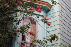 Photograph of a beautiful rose bush with pink roses by 21thoughts