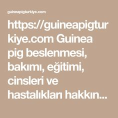 https://guineapigturkiye.com  Guinea pig beslenmesi, bakımı, eğitimi, cinsleri ve hastalıkları hakkında en faydalı ve detaylı bilgiler. Guinea pig, ginepig veya gine domuzu olarak da anılır.  #guinea #pig #ginepig