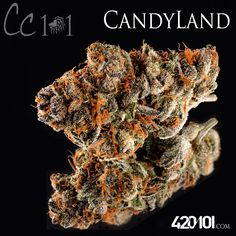 #Candyland is one of the most popular strains in NorCal. It's a Indica dominant cross between Platinum Bay Cookies and GrandDaddy Purple. #420101 #reflections #cookiefam