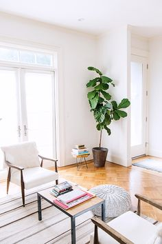 unexpected guests: allison serrell. / sfgirlbybay fig tree and little stool