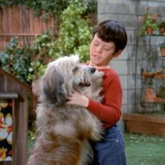 "TV Dogs: Tiger On The Brady Bunch {Part 2} . During the filming of ""Ketchoo,"" the original Tiger was struck by a delivery vehicle on the studio lot. The trainer hurriedly searched for a replacement pooch. Unfortunately, Tiger II was not the actor his predecessor was. The dog proved to be too unruly & was quietly written off the show."