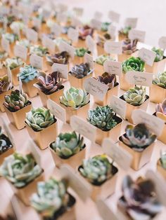 "Arrange a vast selection of tiny succulents for guests to choose from for a rustic wedding favor that doubles as an escort ""card""."
