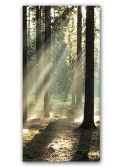 Waldstimmung Motivdruck Papier