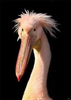 40 aves de bicos estranhos