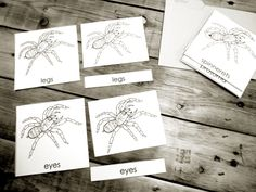 Links to lots of free Montessori nomenclature & three part cards | the little list