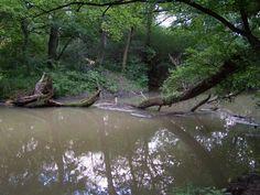 záhorie lesy - Hľadať Googlom