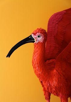 #Paper #Artist #Sculptor #colour #composition #botanical #natural #history #3D #art #flowers #bird #animals #jsrartist