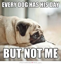 Every dog has his day, but not me. Picture Quotes.