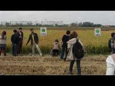 Vigevano e la Lomellina nel vivo della programmazione di #Expo2015 con la visita dei progettisti del cluster di #riso #ClusterExpo #Rice