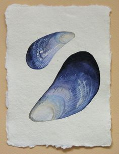 Watercolour study of mussel shell