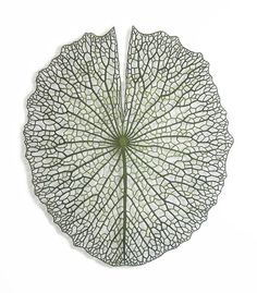 Meredith Woolnough Embroiders Complex Patterns Found In The Fragile Beauty Of Coral, Lily Pads, And Flower Petals - Beautiful/Decay Motif Floral, Arte Floral, Leaf Skeleton, In Natura, Paper Embroidery, Embroidery Ideas, Paper Frames, Patterns In Nature, Nature Pattern