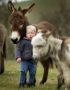 The donkey is her sacred and most favorite animal. When Priapus was going take advantage of her, a donkey let out a loud sound that woke up Hestia and even woke up the other Gods. Animals For Kids, Farm Animals, Animals And Pets, Cute Animals, Beautiful Creatures, Animals Beautiful, Cute Kids, Cute Babies, Mini Donkey