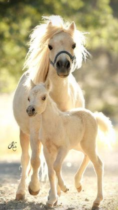Equine - Marilyn Monroe and her colt Wingate's Mi Alihandro - Photo by Arare Photography LLC, By Kelly Campbell Cowboy Magic