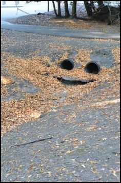 happy drain