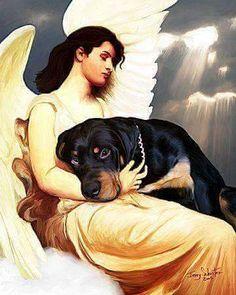 Cuando un perro muere, un angel se encarga de tenerlo y protegerlo entre sus brazos. Su misión en la tierra terminó, fue la de hacer feliz a un humano y enseñarle el significado del verbo amar. Ahora en el cielo, su cometido es el de velar y proteger a ese humano. Él, ya ganó sus alas.