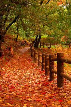 Promenade for Autumn -- by Lafugue Logos via 500px.