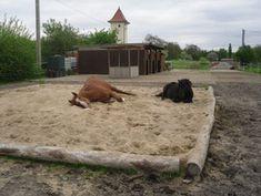 Viel Freiraum, Spaß und Auslauf für die Pferde