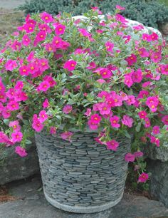 Container Garden Pots - You Can Make Almost Anything Into a Container Garden