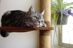里親さんブログ猫へ - http://iyaiya.jp/cat/archives/72746