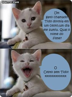 Oh my goodness hahahaha Cat Memes, Dankest Memes, Jokes, Gato Do Face, Funny Photos, Funny Images, 4 Panel Life, Good Humor, Whatsapp Messenger