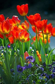 Fotoğraf: HAVE  A  NICE DAY  #TULIPFLOWERS ..