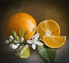 Free Still Life & Red Images – Nature Pictures – Obst Fruit Photography, Dark Photography, Still Life Photography, Fruits Photos, Red Images, Still Life Fruit, Fruit Painting, Still Life Photos, Orange Fruit