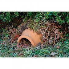 egels in de tuin lokken - Google zoeken