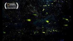 Watch as enchanting fireflies paint the sky.