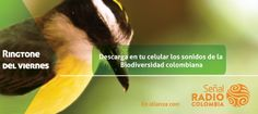 Descarga en tu celular los sonidos de la Biodiversidad colombiana.