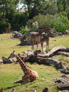 Brevard Zoo, Melbourne, FL