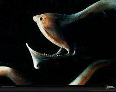 deep sea fish - Google Search