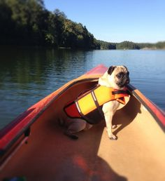 nuggetoflove:  Stella navigating the open waters