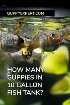 Aquarium Gravel, Aquarium Setup, Aquarium Kit, Aquarium Ideas, Planted Aquarium, 10 Gallon Fish Tank, Freshwater Aquarium Plants, Fast Growing Plants, Pet Fish