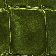 Élitis big croco wallpaper